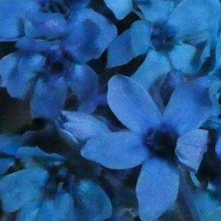 ブルースタ−(ブルー) 1輪 プリザーブドフラワー花材