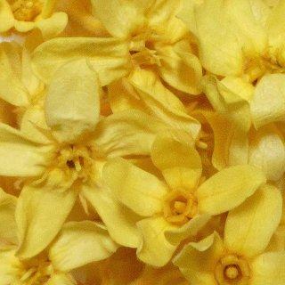 ブルースタ−(イエロー) 1輪 プリザーブドフラワー花材