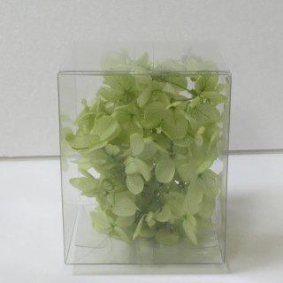 ソフトピラミッドアジサイ ライトグリーングリーン