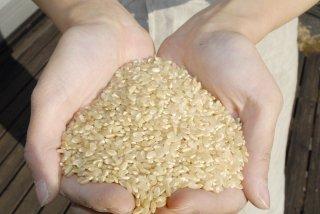 【完売】令和2年産 玄米 自然栽培コシヒカリ (自家採種・熊本県産) 3kg