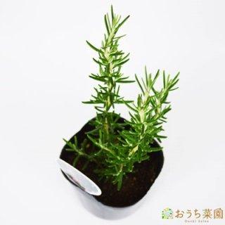 ローズマリー マジョルカピンク 立性 / 苗 / ハーブ 野菜 / 9cm ポット
