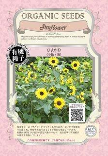 ひまわり / 中輪 / 黄 / 有機 種子 固定種 / グリーンフィールド / 花 [小袋]