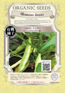 つるなし インゲン / ジャンボ 平 さや / 黄 / 有機 種子 固定種 / グリーンフィールド / 豆類 [大袋]