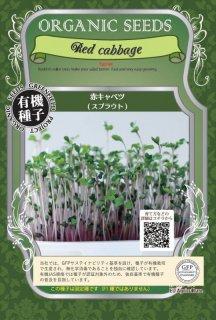 赤 キャベツ / 有機 種子 固定種 / グリーンフィールド / スプラウト [小袋]