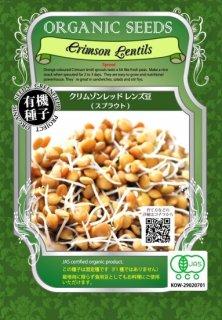 有機 クリムゾン レッド レンズ 豆 / 有機 種子 固定種 / グリーンフィールド / スプラウト [小袋]