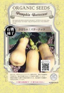 かぼちゃ / バターナッツ / 有機 種子 固定種 / グリーンフィールド / 果菜 [大袋]