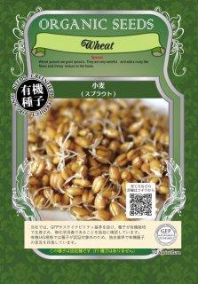 小麦 / 有機 種子 固定種 / グリーンフィールド / スプラウト [大袋]