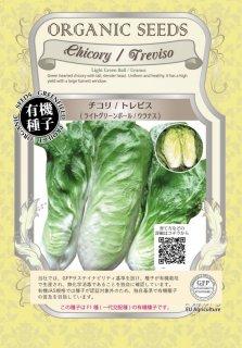 チコリ / トレビスライト グリーンボ−ル / ウラナス / 有機 種子 / グリーンフィールド / 葉菜 [大袋]