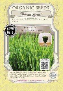 ウィートグラス / 小麦 / スムージー & ジュース 用 / 有機 種子 固定種 / グリーンフィールド / 葉菜 [大袋]