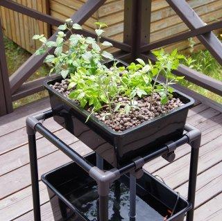 小型 アクアポニックス 水耕栽培 DIY キット オーバーフロー 水槽 / さかな畑 【ブラック】 送料無料