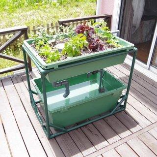 中型 アクアポニックス 水耕栽培 DIY キット オーバーフロー 水槽 / さかな畑 / 送料無料