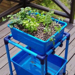 小型 アクアポニックス 水耕栽培 DIY キット オーバーフロー 水槽 / さかな畑  【ブルー】 送料無料