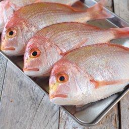 連子鯛(レンコダイ,キダイ)小:18cm以下