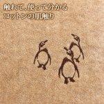 ブラウンペンギン