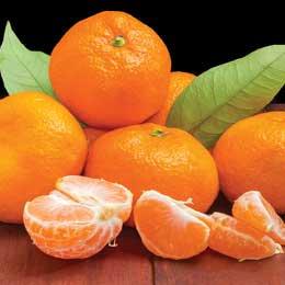 マンダリン赤BIO/Mandarin rouge/Citrus Reticulata