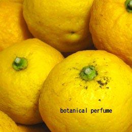 ユズ/Yuzu/Citrus junos