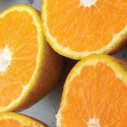 マンダリン/Mandarin/Citrus reticulata