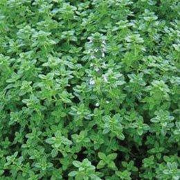 タイムリナロール/Thyme linalool/Thymus vulgaris(ct linalool)