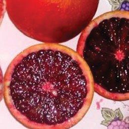 ブラッドオレンジ/Orange blood/Citrus sinensis