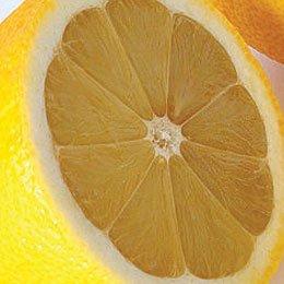 レモン/Lemon pressed/Citrus limonum