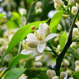 ネロリCO2/NeroliCO2/Citrus aurantium