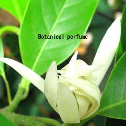 チャンパカ白ABS/Champaca white ABS/Michelia alba