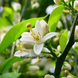 オレンジフラワーCO2/Wild Orange BlossomCO2/Citrus aurantium bigaradia