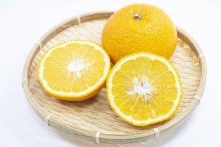 ナツミカン/Summer oranges/Citrus natsudaidai