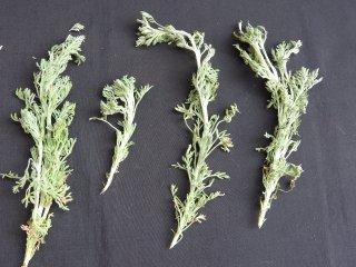 ダバナ/Davana/Artemisia pallens