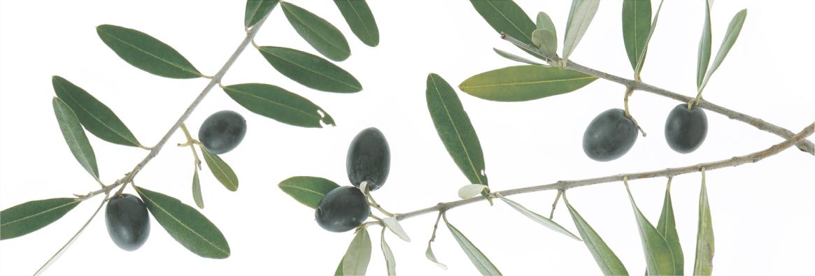 DAMA DE OLIVOは天然オリーブにこだわったボディケアのブランドです