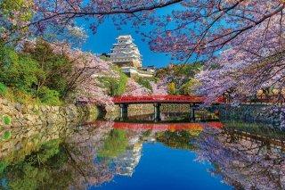 桜咲く姫路城