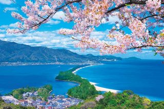 桜咲く天橋立