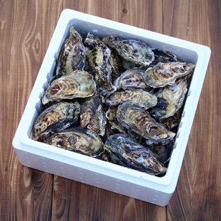 【発送11月下旬以降】漁師直送!備前の牡蠣 (箱サイズM)