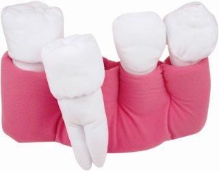 歯根モデル 大/小