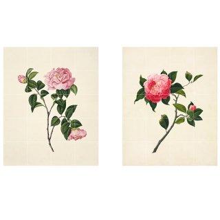 Two Flowers / IXXI ウォールピクチャー