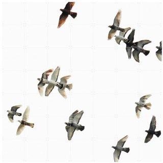 Birds / IXXI ウォールピクチャー