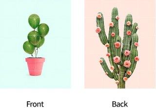 Cactus balloons & Roses/ IXXI ウォールピクチャーsize small 80cmx 100cm