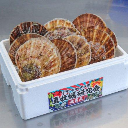 真牡蠣研究会のホタテ(10枚)【送料込】