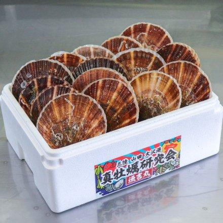 真牡蠣研究会のホタテ(15枚)【送料込】