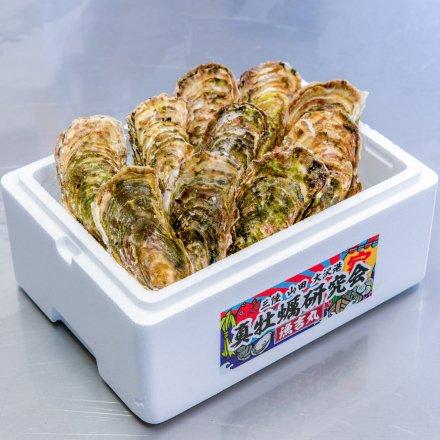 SU00011 <水産物応援商品>真牡蠣研究会の殻付きカキ3年物(10個)[加熱用]【送料無料】 付属品:カキナイフ、軍手