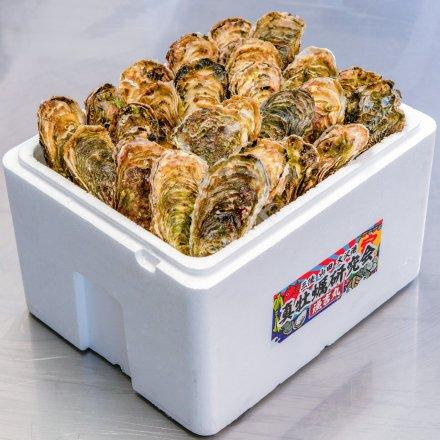 真牡蠣研究会の殻付きカキ3年物(25個)[加熱用]【送料込】