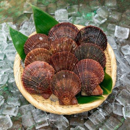 SU00008 <水産物応援商品>白野さんのアカザラ貝(1.5kg)[加熱用]【送料無料】