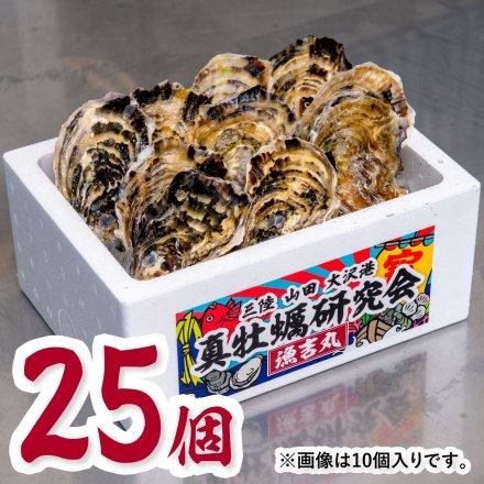 真牡蠣研究会の1年物プレミアムオイスター(25個)[加熱用]おうちでオイスターバー【送料込】
