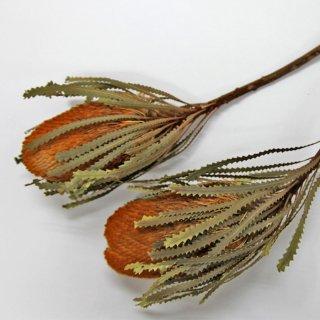 バンクシアホッカラナ オレンジ 2本