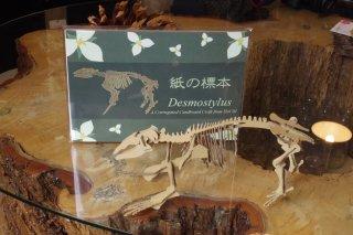「紙の標本」デスモスチルス全身骨格ダンボールクラフト