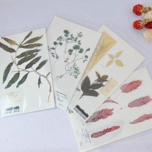 植物・海藻 標本クリアカード
