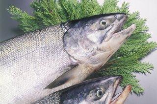 新巻鮭M 内容量:2.7kg前後