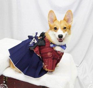 犬コスチューム 和服 和ロリ 着物 上着 羽織り かわいい リボン ロリータ Lolita ワンちゃん イヌ ペット用 和柄 プリント 大きいサイズ サイズ豊富 おでかけ イベント 【ポスト投函対応】