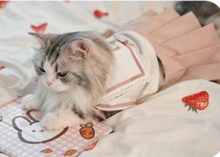 猫用コスチューム 猫用 ネコちゃん ペット用コスチューム かわいい 甘ロリ スカート プリーツ ピンク ふんわり メイド風 レース ふんわり おしゃれ イベント おでかけ ゴスロリ ロリータファッショ