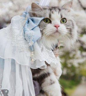 猫用コスチューム 猫用 ネコちゃん ペット用コスチューム かわいい 甘ロリ スカート ドレス リボン チュール ふんわり メイド風 レース ふんわり おしゃれ イベント おでかけ ゴスロリ ロリータフ